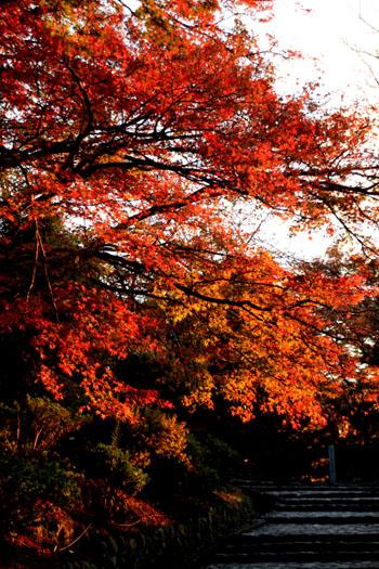紅葉だより42 嵐山_e0048413_22494720.jpg