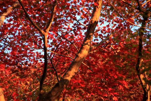 紅葉だより42 嵐山_e0048413_22495867.jpg