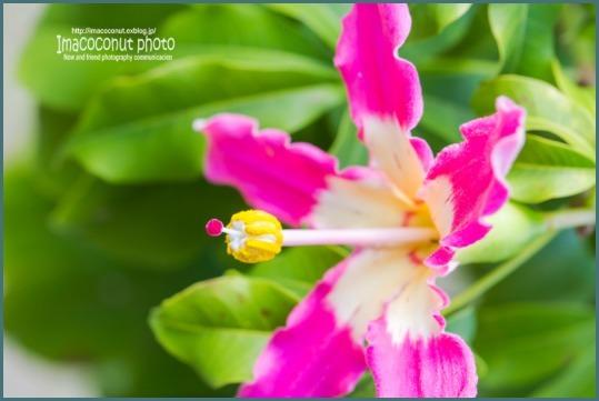 f0308134_20121464.jpg