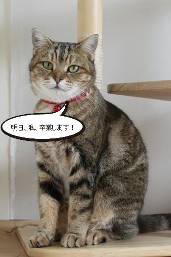 明日卒業と里親様募集センター収容中の成猫さん達_e0151545_21464126.jpg