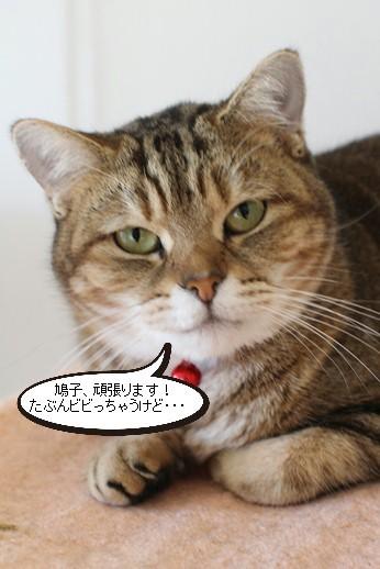 明日卒業と里親様募集センター収容中の成猫さん達_e0151545_21470128.jpg