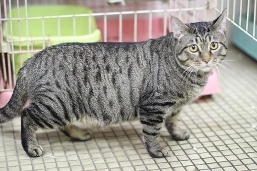 明日卒業と里親様募集センター収容中の成猫さん達_e0151545_21524541.jpg