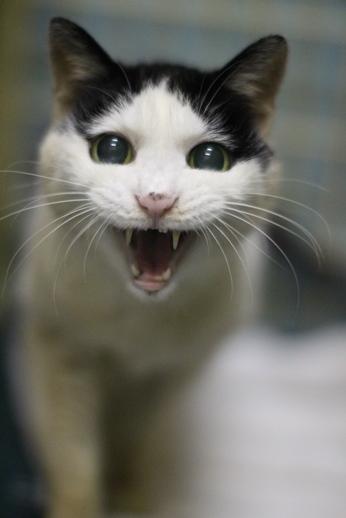 明日卒業と里親様募集センター収容中の成猫さん達_e0151545_21542772.jpg