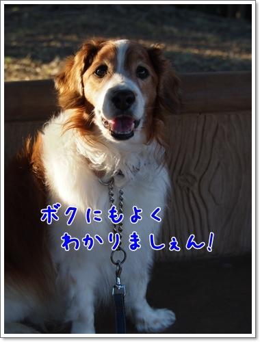 d0013149_00445151.jpg