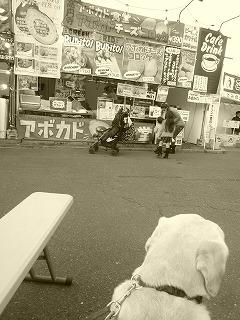 with dog  神宮外苑前その2 銀杏まつりでご当地グルメ_a0165160_16105355.jpg