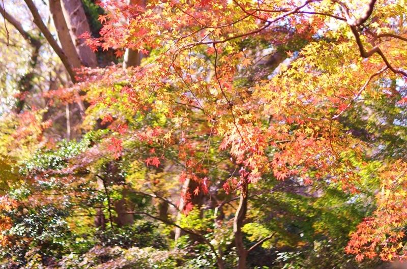 紅葉が始まりました_a0126590_13254418.jpg