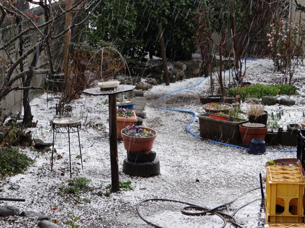 初雪では無くて、雹と霰で庭は真っ白に~~^^_a0136293_1792974.jpg