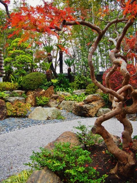 色も深まる秋のお庭_b0172896_10194282.jpg