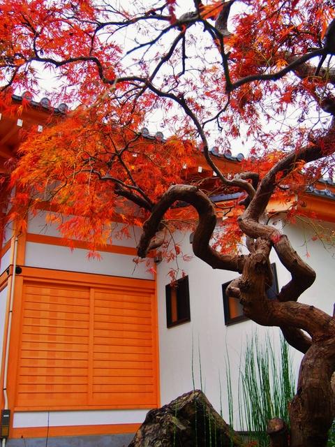 色も深まる秋のお庭_b0172896_1022669.jpg