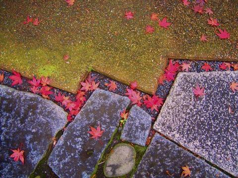 色も深まる秋のお庭_b0172896_10251028.jpg