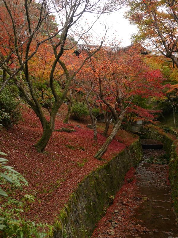 京都紅葉巡り4最終日(11/25-1 東福寺)_c0360399_1810229.jpg