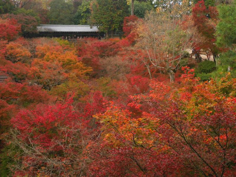 京都紅葉巡り4最終日(11/25-1 東福寺)_c0360399_1841936.jpg