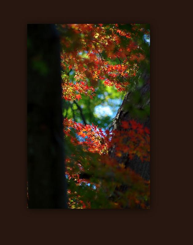 紅葉狩り_d0147812_15591452.jpg
