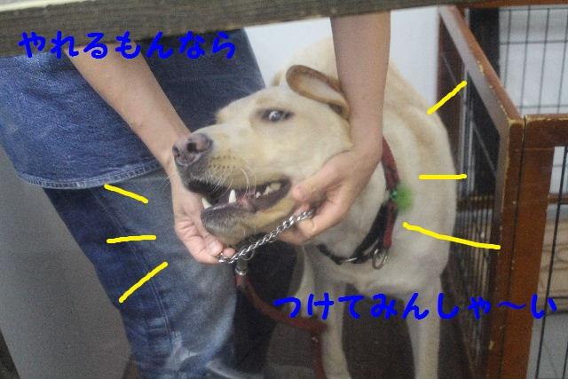 b0130018_2243138.jpg