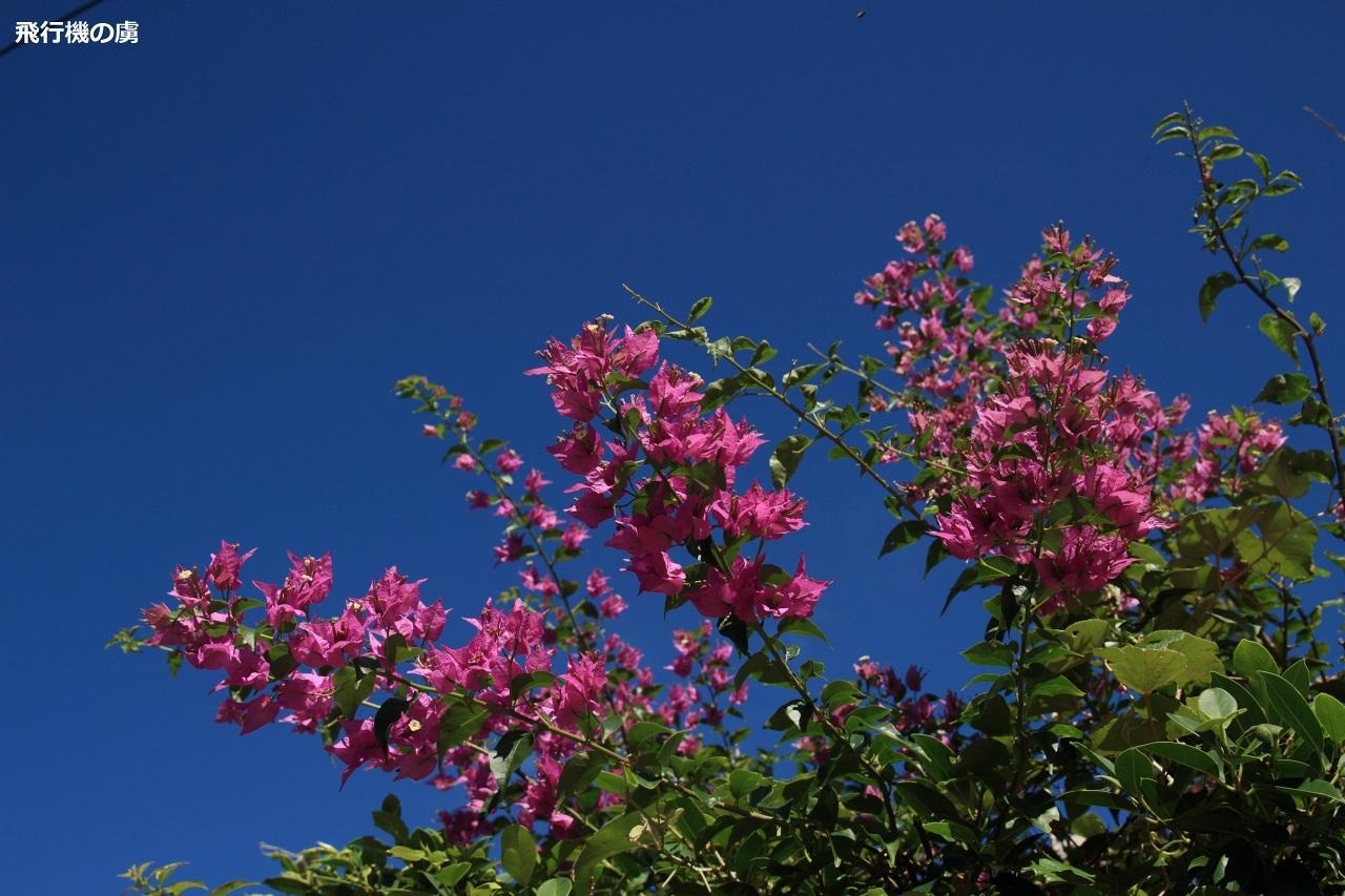 11月の石垣島は真夏日_b0313338_00324372.jpg
