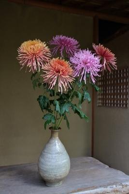 花だより 菊/ 家具展のお茶席_a0279848_17240542.jpg