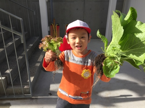 収穫感謝祭_f0324461_20072363.jpeg