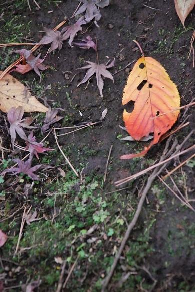 紅葉 Part II_d0135762_19102956.jpg