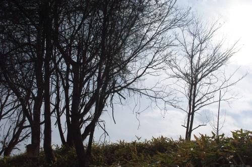 庭と畑の自然素材で、クリスマスリースを作る。_c0110869_6274751.jpg