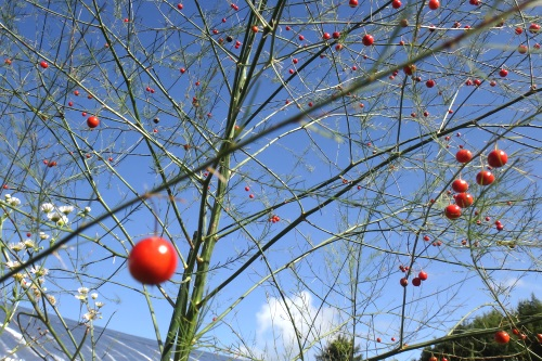 庭と畑の自然素材で、クリスマスリースを作る。_c0110869_6342418.jpg