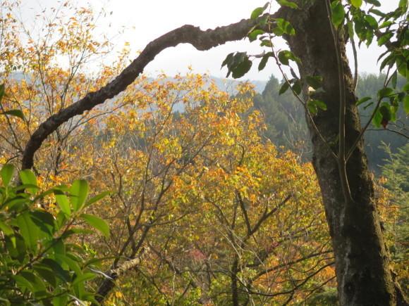 滝坂の道~下りは楽だと思ったら②~_c0001670_11381050.jpg