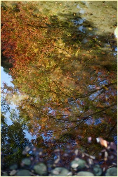 東京の秋 -1_b0340572_20544594.jpg