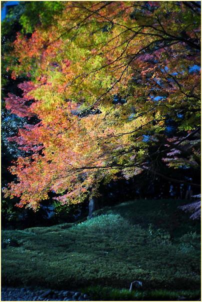 東京の秋 -1_b0340572_20554894.jpg