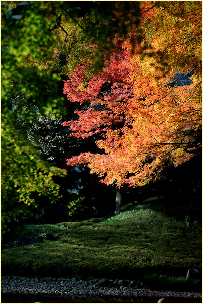 東京の秋 -1_b0340572_20561789.jpg
