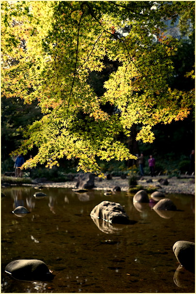 東京の秋 -1_b0340572_20563612.jpg