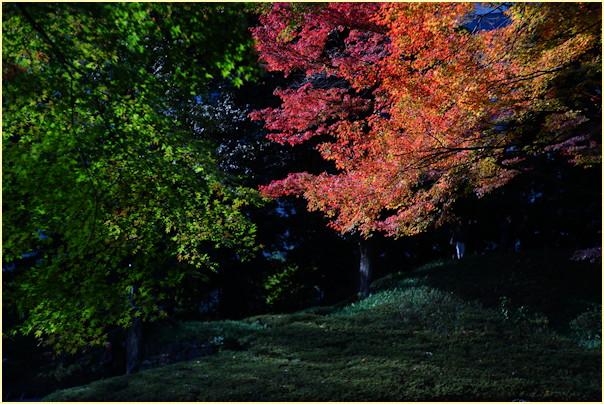 東京の秋 -1_b0340572_2059342.jpg