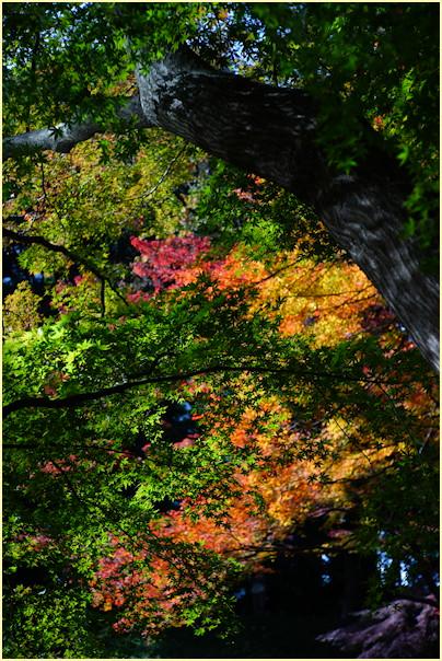 東京の秋 -2_b0340572_21211470.jpg