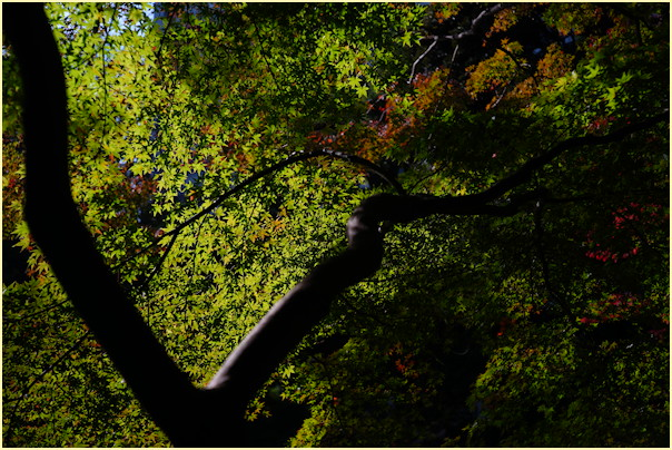 東京の秋 -2_b0340572_21231268.jpg