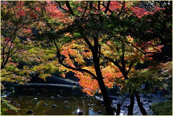 東京の秋 -2_b0340572_21233055.jpg