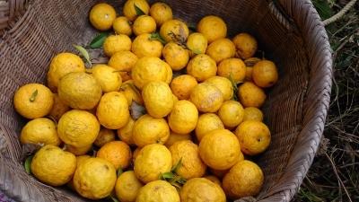 柚子胡椒を作るの巻20151128_e0225183_01120049.jpg