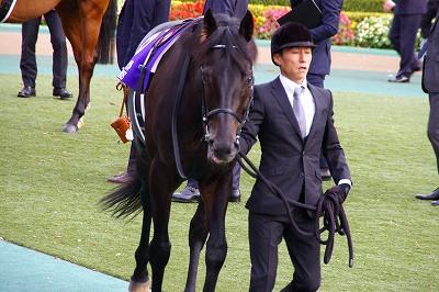 牝馬の時代は続く、ジャパンCはショウナンパンドラがGI2勝目を飾る _b0015386_22254985.jpg