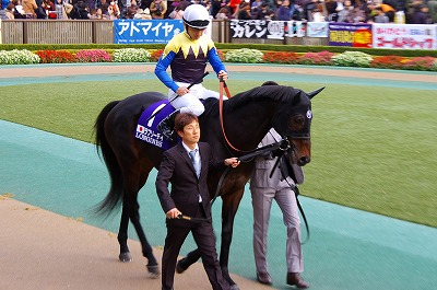 牝馬の時代は続く、ジャパンCはショウナンパンドラがGI2勝目を飾る _b0015386_22262360.jpg