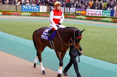 牝馬の時代は続く、ジャパンCはショウナンパンドラがGI2勝目を飾る _b0015386_22281753.jpg