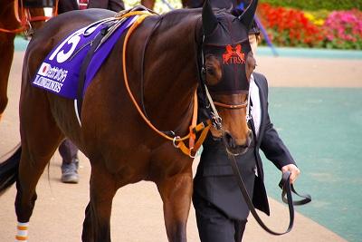 牝馬の時代は続く、ジャパンCはショウナンパンドラがGI2勝目を飾る _b0015386_22284764.jpg