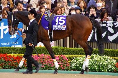 牝馬の時代は続く、ジャパンCはショウナンパンドラがGI2勝目を飾る _b0015386_2228953.jpg