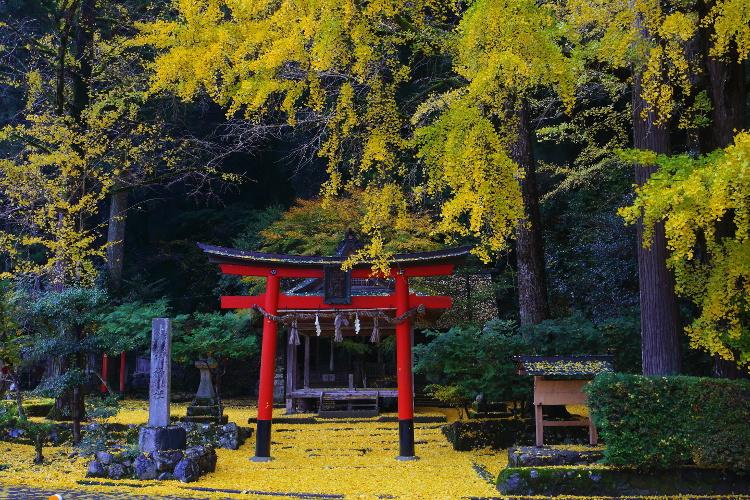 岩戸落葉神社_e0051888_4423689.jpg