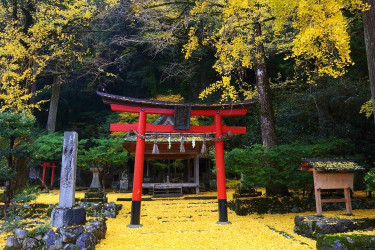 岩戸落葉神社_e0051888_4434270.jpg