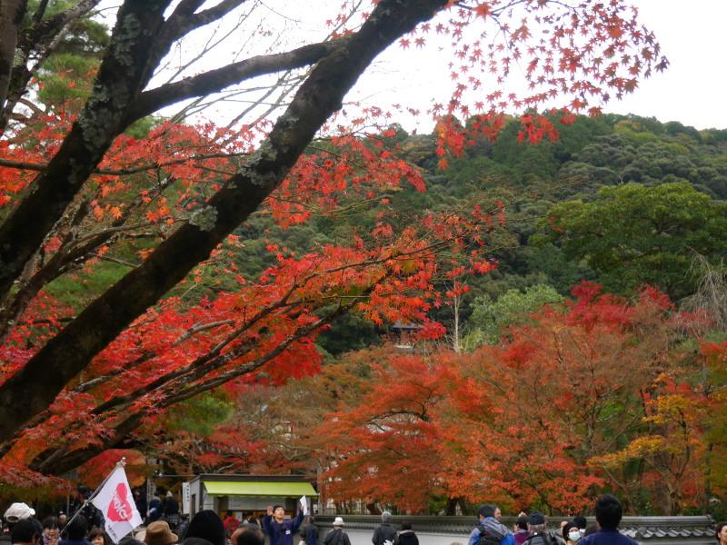 京都紅葉巡り5最終日(11/25-2 永観堂)_c0360399_16384712.jpg