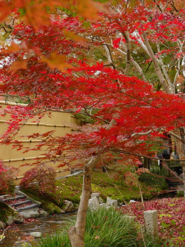 京都紅葉巡り5最終日(11/25-2 永観堂)_c0360399_1710272.jpg