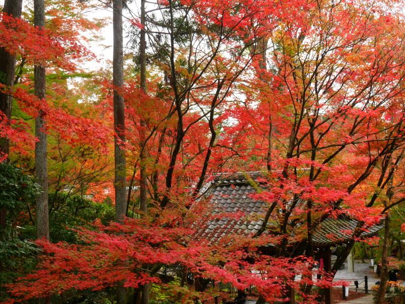 京都紅葉巡り5最終日(11/25-2 永観堂)_c0360399_17105768.jpg