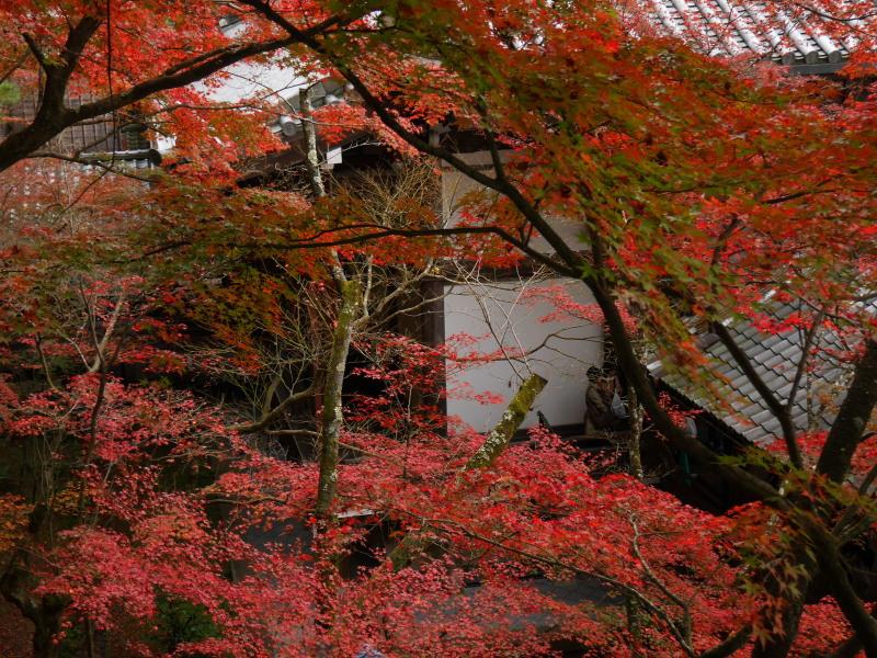 京都紅葉巡り5最終日(11/25-2 永観堂)_c0360399_1745030.jpg