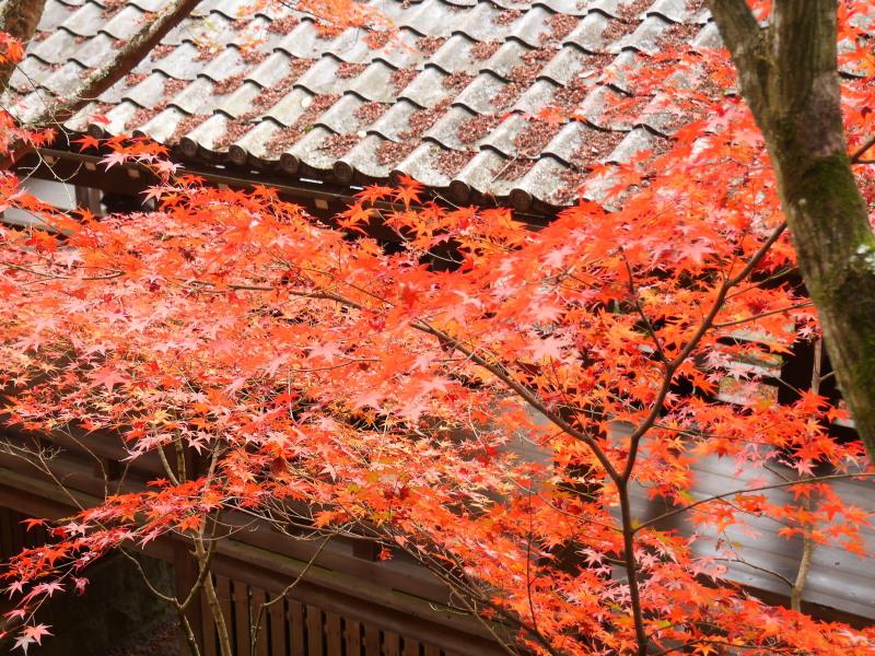 京都紅葉巡り5最終日(11/25-2 永観堂)_c0360399_175054.jpg
