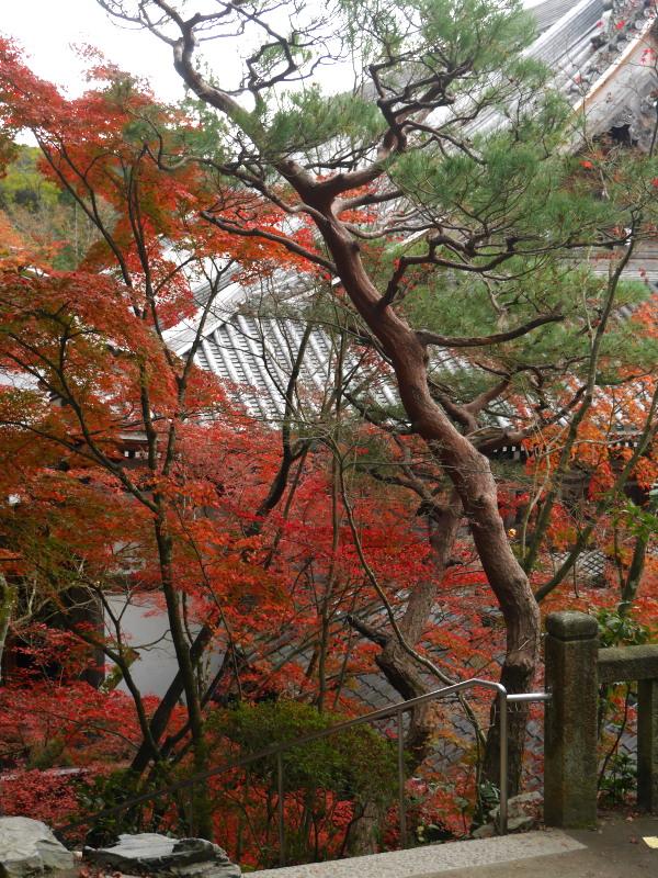 京都紅葉巡り5最終日(11/25-2 永観堂)_c0360399_1791639.jpg
