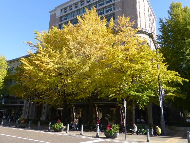 秋の横浜 散歩_e0237625_171418100.jpg