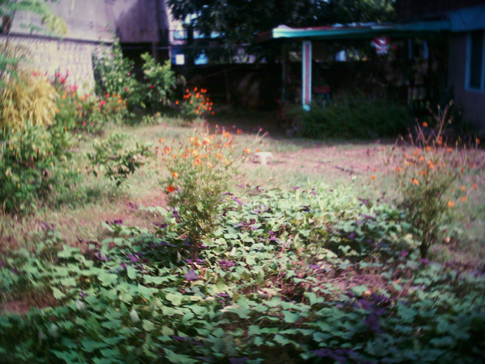 The Filipino garden residence WITHIN Northern Mindoro Academy!!!_e0202828_10391748.jpg