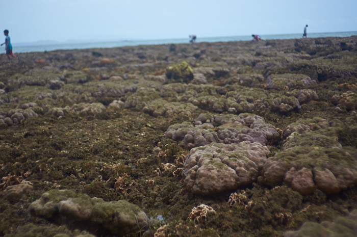 One of the tideland coral reefs which are almost died_e0202828_10403657.jpg
